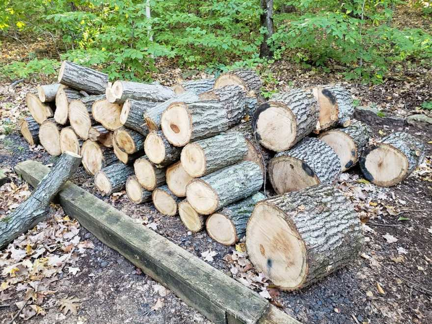 the wood pile